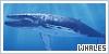 Aquatic Animals: Whales: