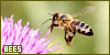 Invertebrates: Bees: