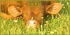 Mammals: Other Herbivores: Cows: