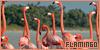 Birds: Flamingos: