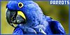 Birds: Parrots: