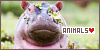 General Animals: Animals: