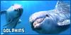 Aquatic Animals: Dolphins:
